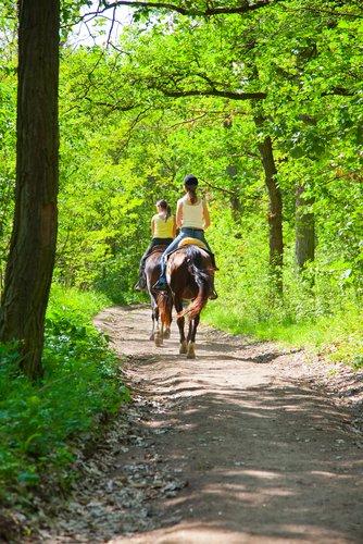 Caballos en Valencia para hacer rutas y paseos a caballo