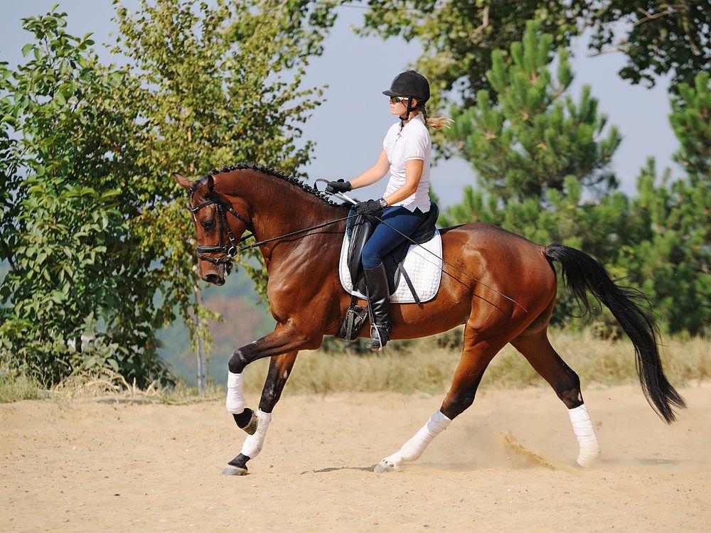 Clases de equitacion en valencia