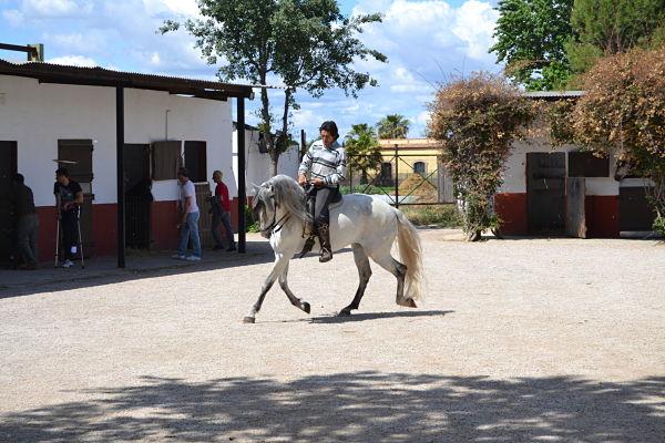 equitación y doma en Valencia