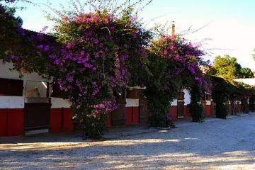Centro Hípico en Valencia