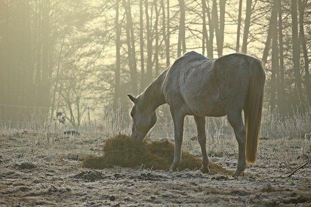 alimentacion de los caballos