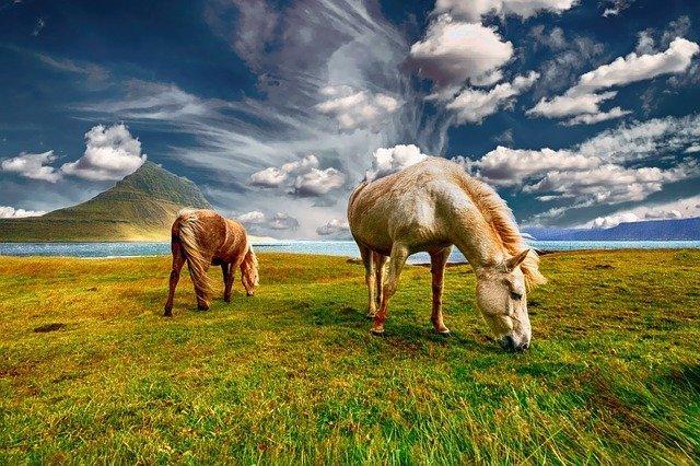 que comen los caballos